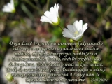 ...wasze dusze obudźcie modlitwą, aby były gotowe przyjąć Jezusa Zmartwychwstałego