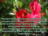 Tak jak przyroda daje najpiękniejsze kolory roku, tak i aj was wzywam, abyście własnym życiem dawali świadectwo