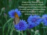 On, nawet poprzez najmniejszy kwiat mówi o swoim pięknie i o miłości, którą was stworzył