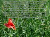 Drogie dzieci! Również dziś wzywam was, byście się modlii i pościli w intencji pokoju...